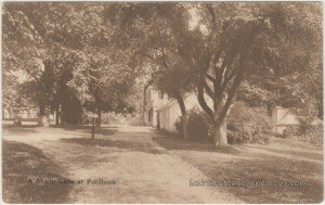 A Shady Lane At Fordhook pc1