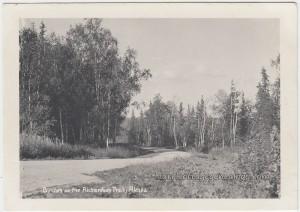 Birches On The Richardson Trail p1