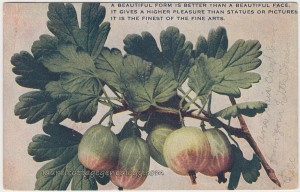 Figs pc1