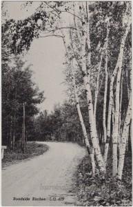Roadside Birches pc1