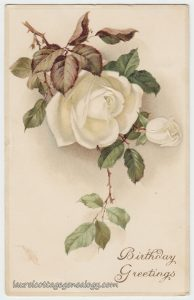 white-rose-birthday-greetings-pc1
