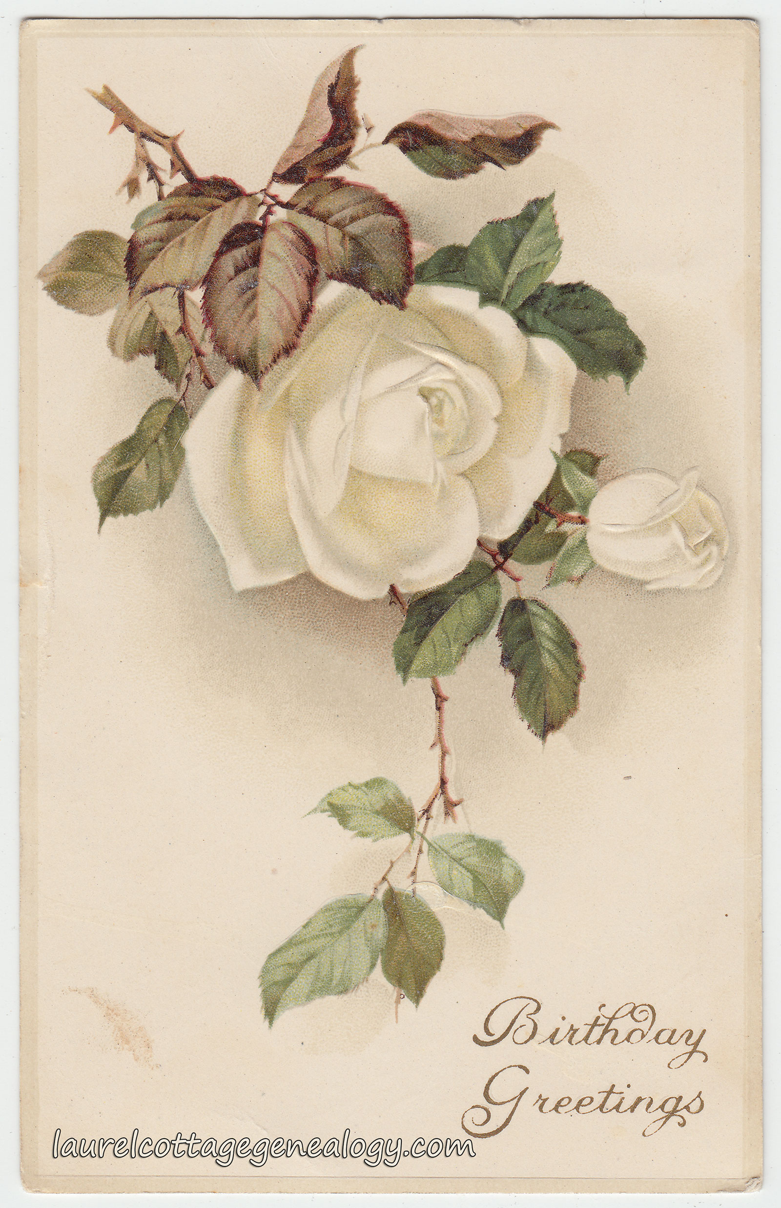 White Rose Birthday Greetings Laurel Cottage Genealogy