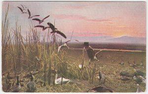 los-banos-california-waterfowl-pc1